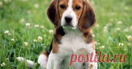 Кормим щенка правильно - Братья наши меньшие - ГОРНИЦА - дайджест новостей, авторские блоги
