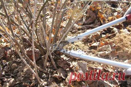 Как правильно обрезать крыжовник осенью – полезные советы новичкам | В саду (Огород.ru)