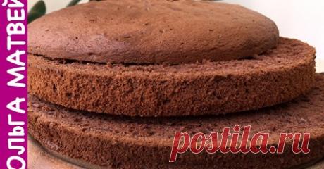 Шоколадный бисквит (секреты приготовления) | Ольга Матвей | Готовить Просто | Яндекс Дзен