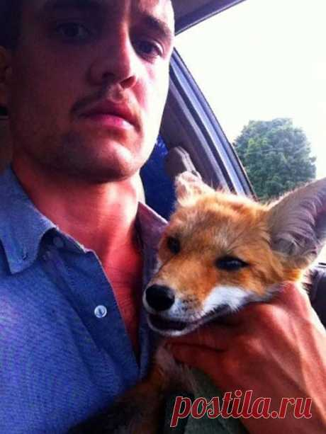 He found a dead fox on the street! What happened next was a real miracle. – Petsfans