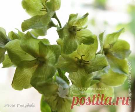 Hellebore from hf. Master class. | Country of Masters