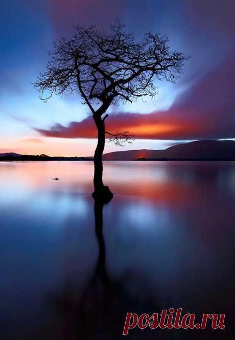 Misaki S  Tree & Path