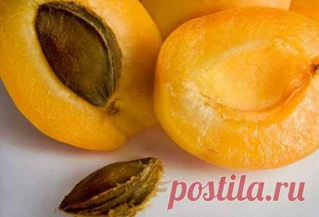 Как ухаживать за абрикосом, чтобы он не засох и давал хороший урожай   Садовый Гном   Яндекс Дзен