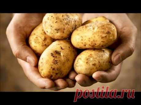 Есть картошка? Вкусный рецепт, когда живешь на минималку #shorts