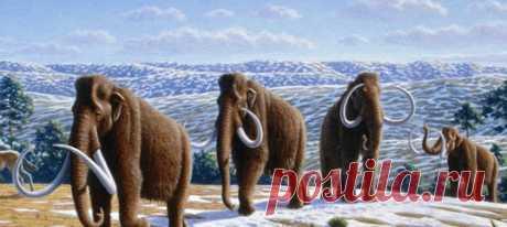 В Якутии надеются, что современные технологии в недалёком будущем позволят возродить мамонтов и заселить ими тундру.