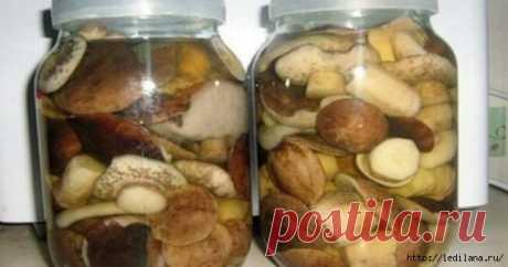Маринад, подходящий абсолютно для всех сортов грибов