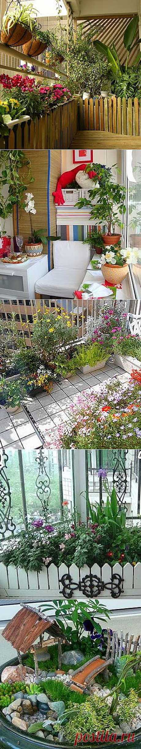Цветы на балконе: 16 вариантов дизайна балкона - Учимся Делать Все Сами