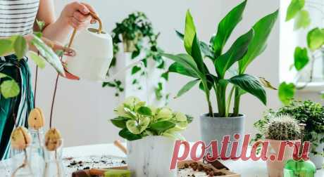 О чем пытаются вам рассказать листья комнатных растений / Домоседы
