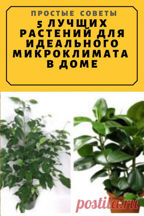 5 лучших растений для идеального микроклимата в доме — Простые советы