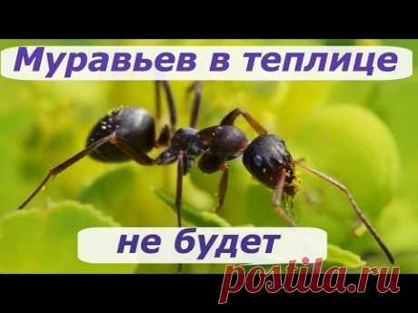 396. Муравьев в теплице больше нет