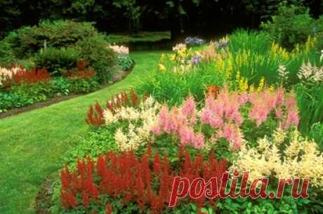 Календарь цветения многолетников | Любимые цветы