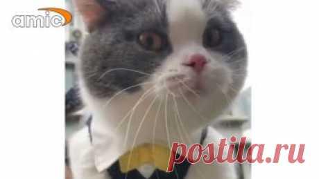 Кот-матершинник покорил пользователей соцсетей Некоторые предположили, что кот всю ночь провел в отделе полиции и пытается рассказать об этом