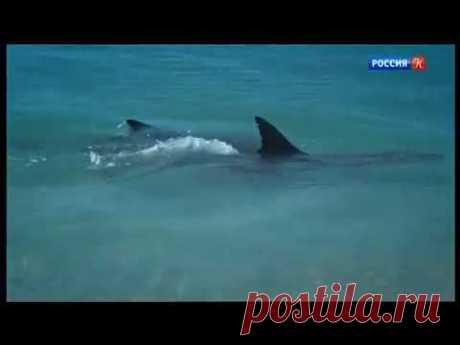 Династия дельфинов