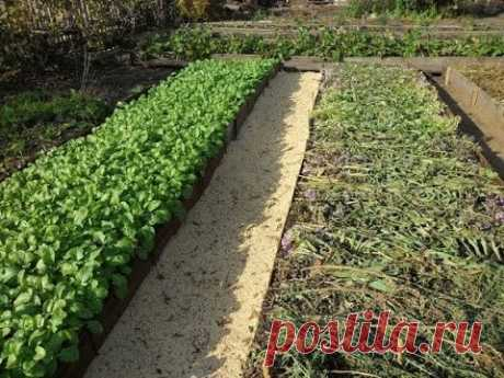 Как не копать грядку - природное земледелие
