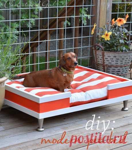 Современная кровать для домашних животных DIY   Центациональный стиль