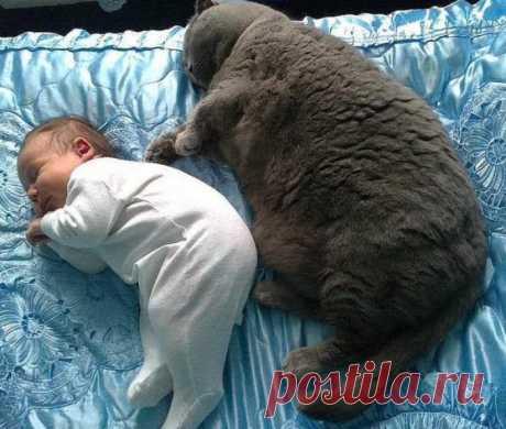 Детство - это когда твой котик не только старше, но и больше, и толще тебя