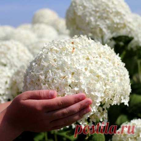 Новинки 2017 в интернет-магазине семян и саженцев Беккер