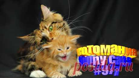 Вам нравится смотреть смешные видео про котов? Тогда мы уверены, Вам понравится наше видео 😍. Также на котомании Вас ждут: видео кот,видео кота,видео коте,видео котов,видео кошек,видео кошка,видео кошки,видео о котах, видео о кошках смешные, видео смешные кошка, кот смешное видео, кото приколы, кошка смешная, кошки, приколы от кошек, про кошек смешных, с кошками, смешно кошка, смешные животные бесплатно, смешные кошки