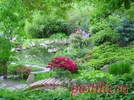 Цветники.Цветники располагают на самых видных парадных местах, вдоль дорожек, в местах отдыха, причем так, чтобы ассортимент цветочных культур обеспечивал непрерывность цветения в течение всего вегетационного периода.