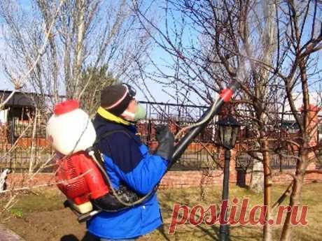 Уход за плодовыми деревьями - Наша дача - медиаплатформа МирТесен