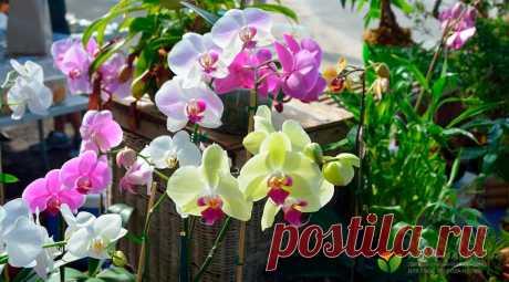 Как поливать орхидеи: полив орхидеи - Agro-Market