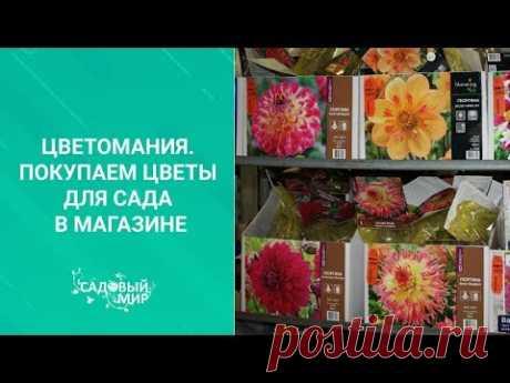 Цветомания. Покупаем цветы для сада в магазине