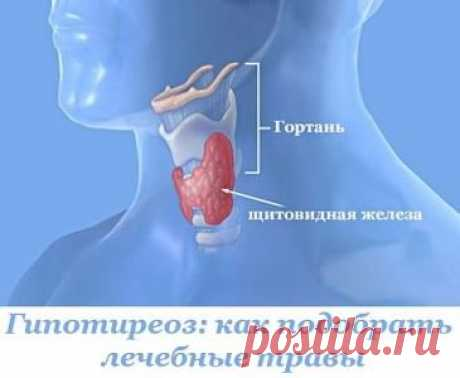 Hypothyroidism: how to pick up medicative herbs