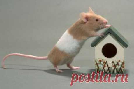 Непрошеные гости: как защитить дачу от мышей перед зимой? | 6 соток