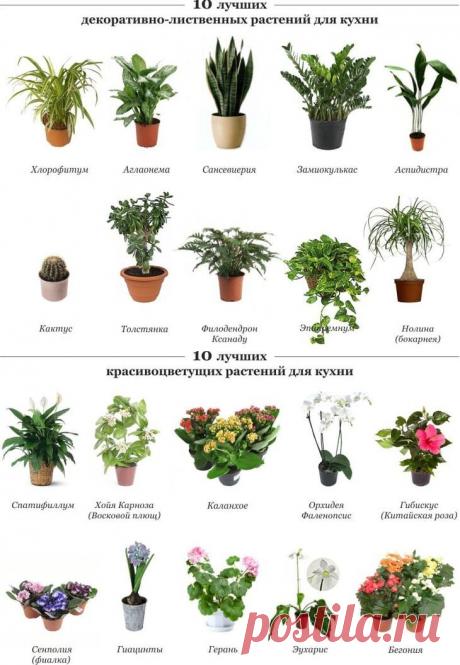 Комнатные цветы и растения для кухни — выбираем неприхотливые, полезные и красивые