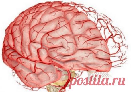 Очищение сосудов головного мозга. Улучшение памяти. Очищение сосудов головного мозга с применением правильного питания и народных средств являются профилактикой инсульта и сохранения памяти