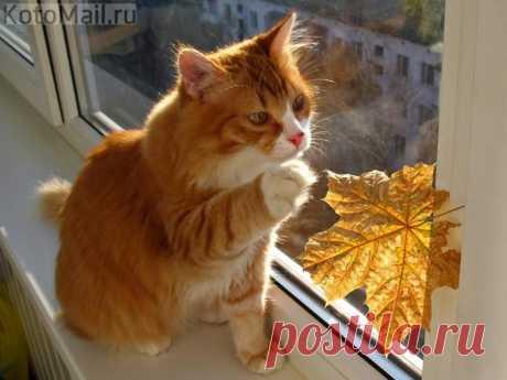Осень, мы так с тобой похожи! Моё солнечное чудо!!!