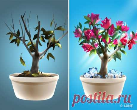 Простой трюк, спомощью которого ваши растения станут цвести пышно иневероятно долго