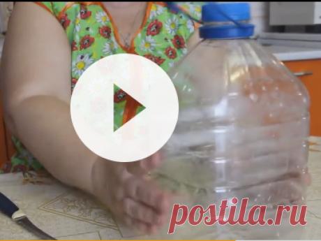Парник для рассады из пластиковой бутылки