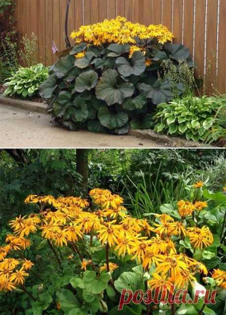 Список тенелюбивых садовых растений с фото - деревья и кустарники, теневыносливые цветущие растения, ягодники и овощи, которые можно посадить в тенистых местах.