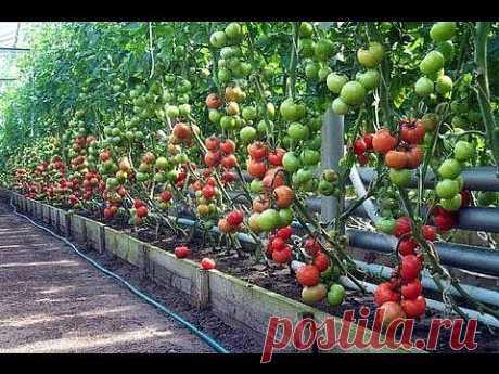 ▶ 1. Метод доктора Миттлайдера. Технология изобилия урожая (по методу Миттлайдера) 1 - YouTube