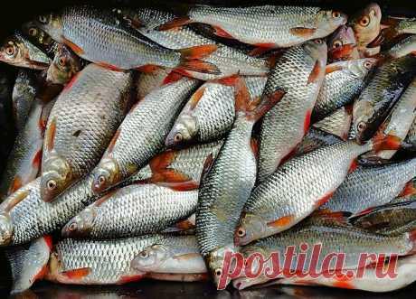 Сборная мормышка – простая и результативная снасть | Рыбалка для людей | Яндекс Дзен