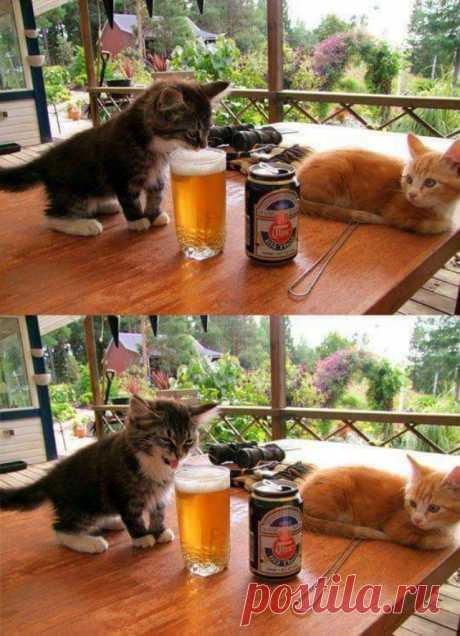 Держите свои животики — на связи смешные котики