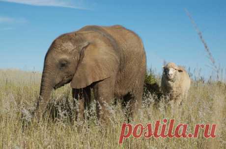 Удивительные фото животных, которые никогда бы не ужились вместе, но вопреки всему стали семьей (истории, разрушившие все законы здравого смысла) — блог туриста ni-oca на Туристер.Ру