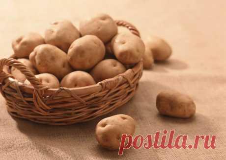 Голландская технология выращивания картофеля на личном участке | 6 соток