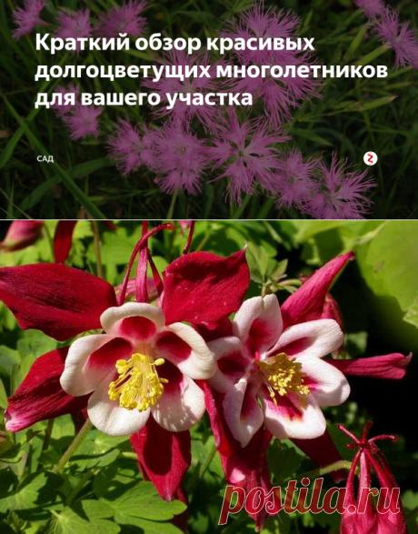 Краткий обзор красивых долгоцветущих многолетников для вашего участка | САД | Яндекс Дзен