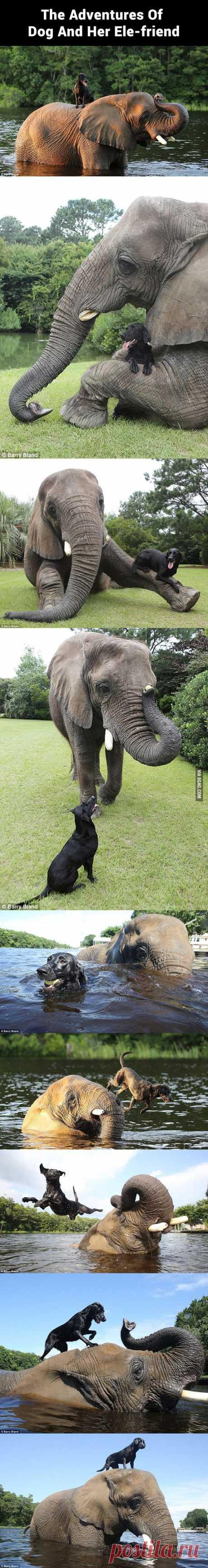 Дружба!!! :-)