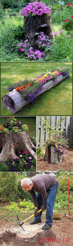 Как сделать клумбу в пне или дереве своими руками | Для дачников.ру