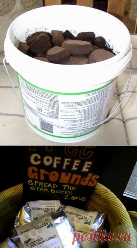 Использование кофе для сада — Полезные советы
