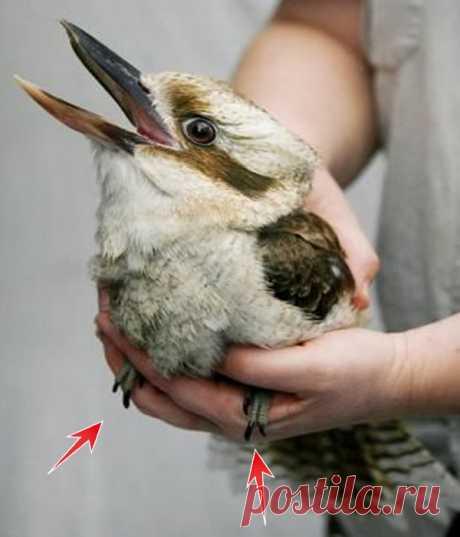 Кто, по-вашему, изображен на фото - птичка или кролик! Ответ расскажет кое-что о вашей личности!