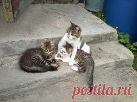 котятки с мамкой
