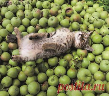 Rejuvenating apples happen different;)