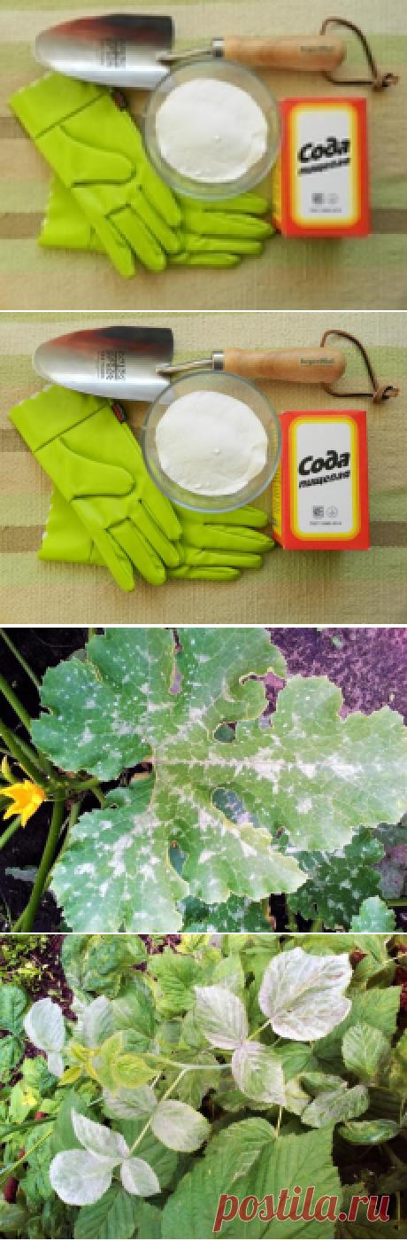 Пищевая сода для сада и огорода: 22 способа применения