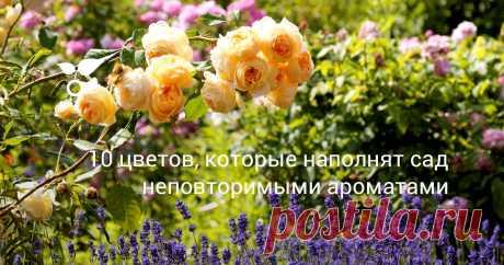 10 цветов, которые наполнят сад неповторимыми ароматами В этой статье расскажем о самых ароматных цветах, которые порадуют своим запахом, главным образом, днем. Но есть еще и ночные (опыляемые ночными бабочками) ароматные цветы.