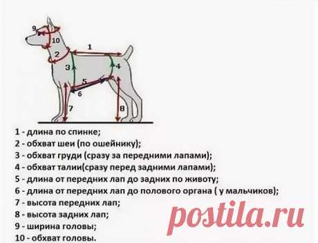 Как правильно снять мерки с собаки