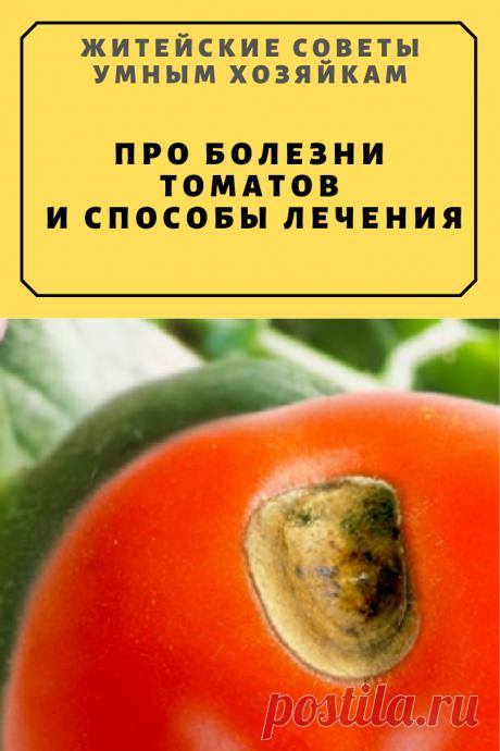 Про болезни томатов и способы лечения | Житейские Советы
